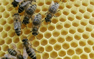 Vandals Topple NorCal Beehives, Kill 200,000 Bees With Fuel