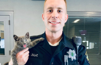 Grumpy Cat 2.0? Kitten Rescued by Palo Alto PD has 'a Lot of Personality'
