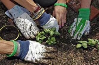 Adult Gardening Workshop at Guadalupe River Park Conservancy