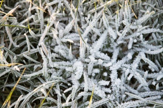 Freeze Warning, Frost Advisory Issued Across Bay Area