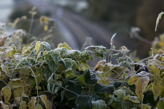 Freeze Warning, Frost Advisory Issued Across Bay Area