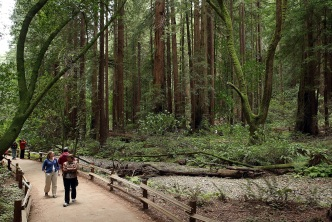 Visiting Muir Woods Will Require a Reservation in 2018