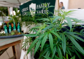 Legal Recreational Pot in California: What You Need to Know
