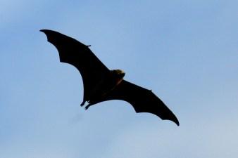 Bat Week: NPS Fêtes the Flying Mammals