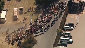 The Wild West: Cattle Drive Kicks Off Annual Alameda County Fair