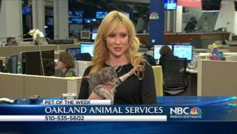 Bay Area Proud Pets: Guinevere