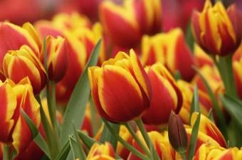 Petal Peek: National Public Gardens Day