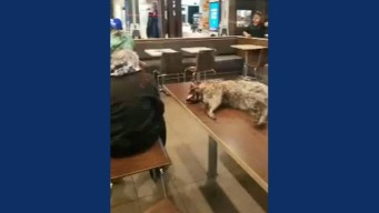 Video of Man With Dead Raccoon in McDonald's Sparks Concerns