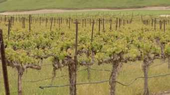 Bay Area Wineries 'Held Hostage' in U.S., China Trade War