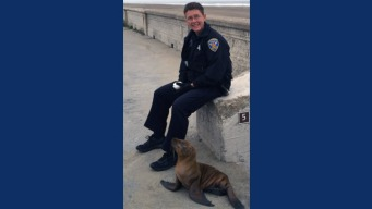 Police Help Rescue Stranded Sea Lion in SF