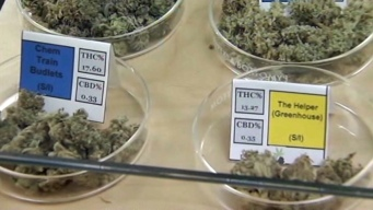 U.S. Attorney Drops Oakland's Harborside Marijuana Dispensary Case