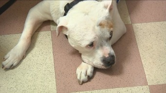 Clear the Shelters: Don't Overlook 'Experienced' Friends