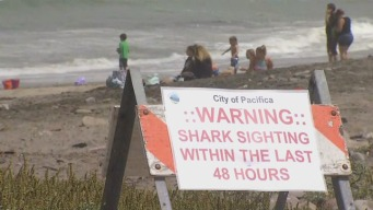 Shark Sighting in Pacifica, Officials Say Beware