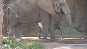 Visitors Finally Meet Baby Elephant Ajabu