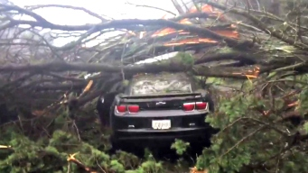 Tree Crashes on Camaro, Closes Oakland Highway