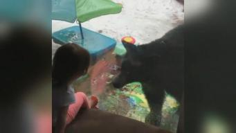 Family is Greeted by a Black Bear in Lake Tahoe