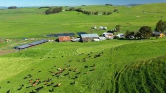 Open Field Farms