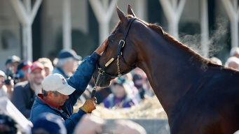 What's in a Name? For Derby Race Horses, Plenty