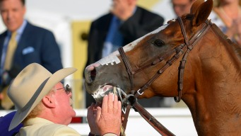 California Chrome Co-Owner Is Toast of Nevada