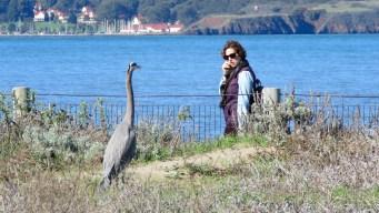 SF Bay Trail Walkers