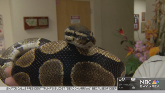 Florida Man Finds Python in a Pantry
