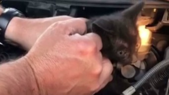 RAW: Firefighters Free Kitten Trapped in Car Engine