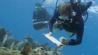 Want to Save Coral Reefs? First, Save the Fish: Study