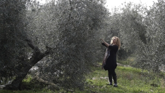 Sticker Shock for Olive Oil Buyers After Bad Italian Harvest