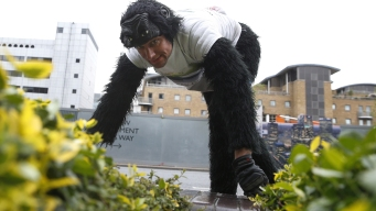 'Mr. Gorilla' Finishes Crawling the London Marathon: Report
