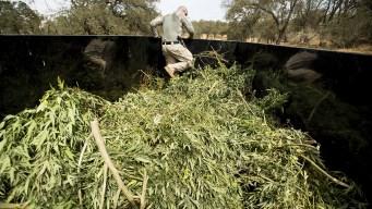 California Law Enforcement Braces for New Marijuana Laws