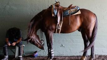 Another Horse Dies at Santa Anita Race Track
