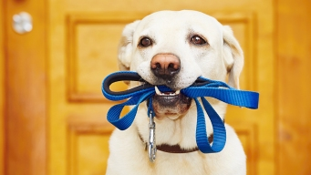 Maryland Condo Using DNA Kits to Solve Dog Poop Mysteries