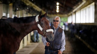 American Pharoah Arrives in New York