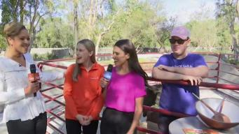 California Live is Running Wild With Goats