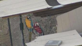 Compromise Reached in Castro Valley Caged Birds Case: Sheriff's Office