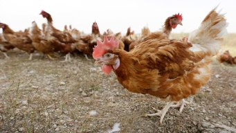 Egg Prices Reach 10-Year Lows on Low Demand