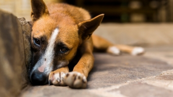 Dog Food Withdrawn Over Concerns About Euthanasia Drug