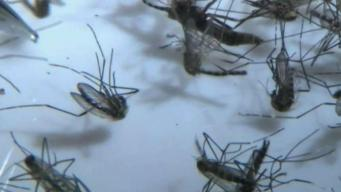 2 Deaths in California Due to West Nile Virus: CDPH