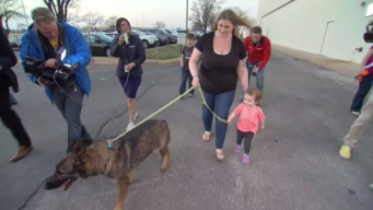 Dog Mistakenly Flown to Japan Reunited With Kansas Family