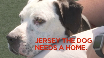 Jersey the Dog Needs a Home