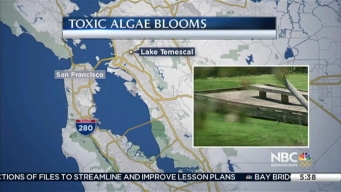 Lake Temescal in Oakland For Third Consecutive Summer Closed Because of Toxic Algae Bloom