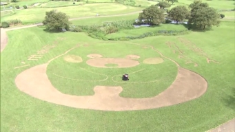 Popular Japanese Mascot Kumamon Treated to Large Grass Cutout