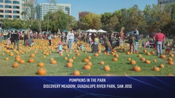 Giant Pumpkin Patch at Guadalupe River Park