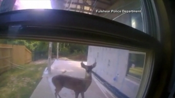 Texas Cop Saves Deer Tied to Tree