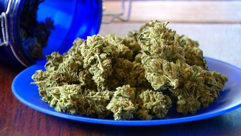Marijuana-Based Drug Helps Reduce Seizures