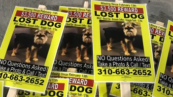 Couple Pours Thousands Into Search for Missing Dog
