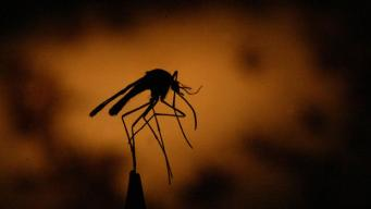 Aerial Spraying to Control Mosquitoes After Harvey