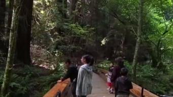 Muir Woods Reservation System Begins