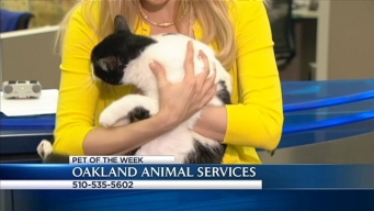 Bay Area Proud Pets: Nani