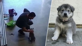 Caught on Camera: Man Steals Puppy From San Jose Business